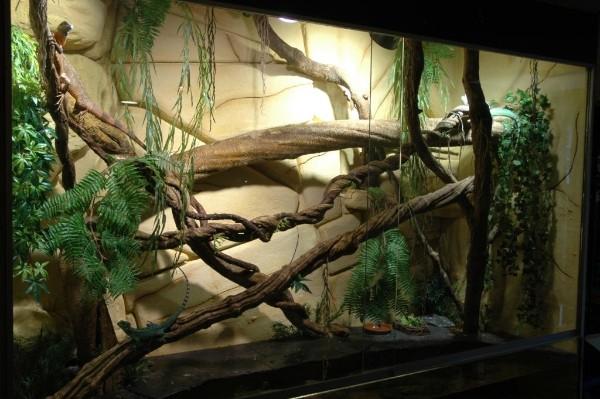 terranium groene leguaan ( foto aqualingen.nl )