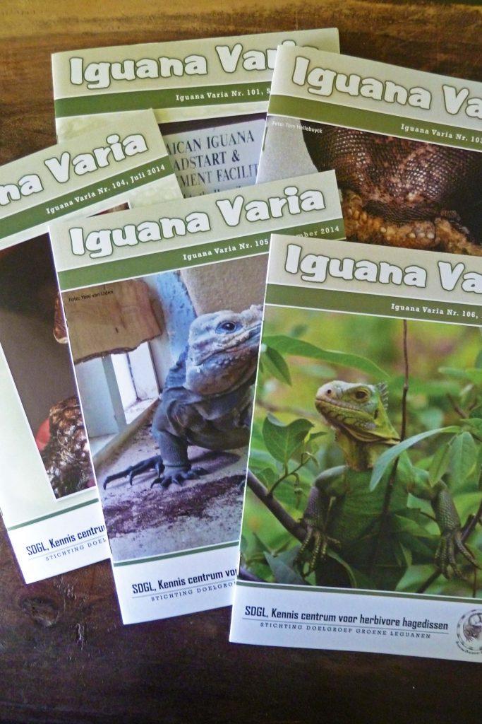 Ontvang 4 x per jaar de Iguana Varia met interessante artikelen over de doelgroepdieren.
