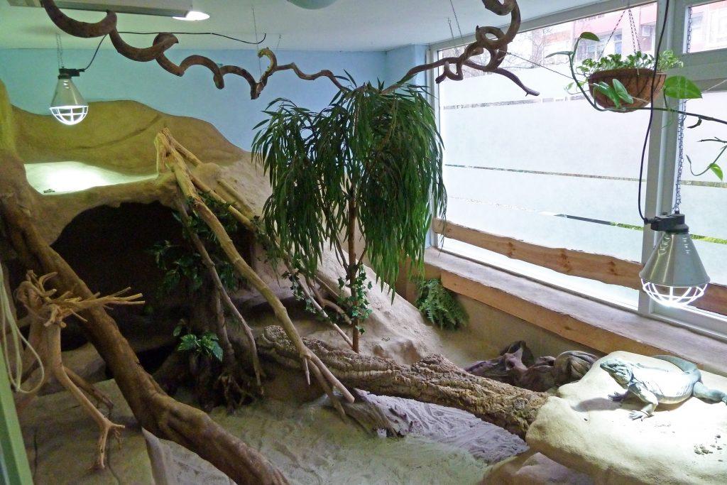 Kamer van 12 m² voor Cyclura cornuta man